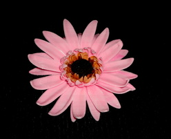 how to make a gumpaste gerbera flower